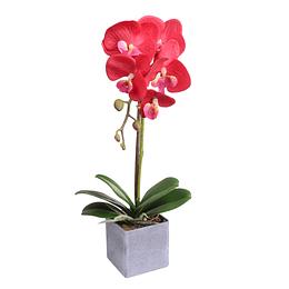 Orquídea C/Pote Vinotinto