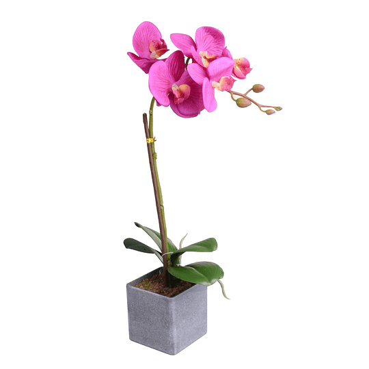 Orquidea C/Pote Violeta