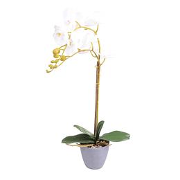 Orquidea C/Pote Blanca