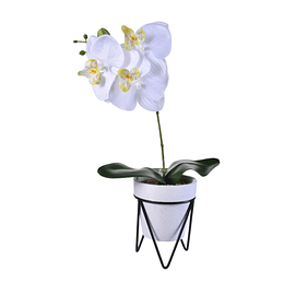 Flor Cayena Blanca  C/ Pote
