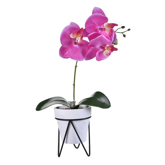 Flor Cayena Violeta  C/ Pote