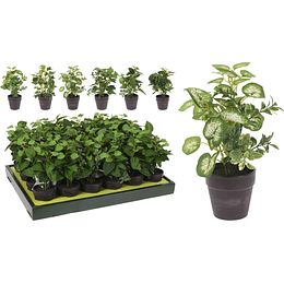 Maceta Planta 20Cm