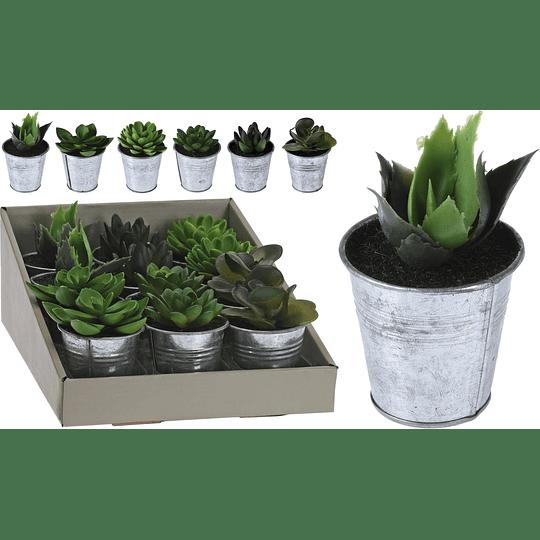 Maceta en Zinc con Planta 10 cm