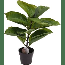 Maceta con Planta 38 cm