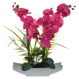 Orquídea Fucsia Con Maceta En Forma De Arca