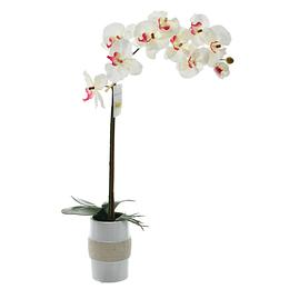 Orquídea Blanca Con Maceta