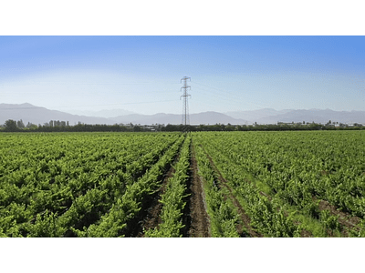 aerial video Rancagua grape 05