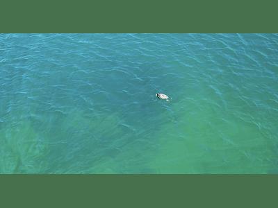 Video Laguna del Maule 02