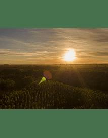 Foto Bosques del sur puesta de sol