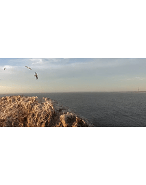 video clip_constitucion - # 3 birds of the coast