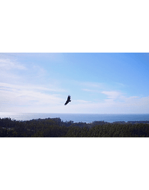 video aereas pajaro grande