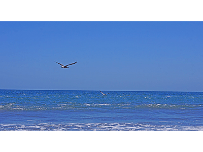photo bird flying over the sea 01 bird couple