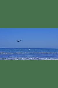 foto ave volando sobre el mar 01 pareja de aves
