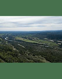 Foto Octava región bosques y naturaleza5