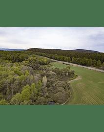 fotos Octava región bosques y naturaleza6