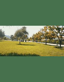Video Parque Bicentenario #01