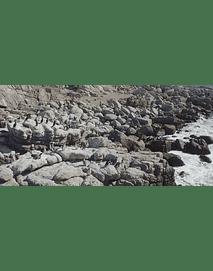 Video Pinguinos Algarrobo  #34