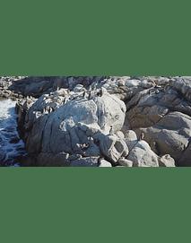 Video Pinguinos Algarrobo  #35