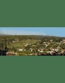 Algarrobo ciudad 001