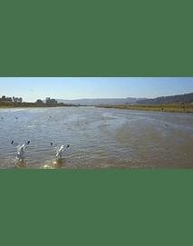 Video Gaviotas en Rio Maipo #06 (gaviotas en el rio Maipo)