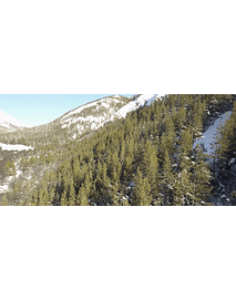 Video Aereo Aysén Invierno #17 (bosques de pinos)