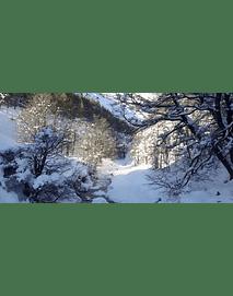 Video Aereo Aysén Invierno #20 (riachuelo en el bosque)