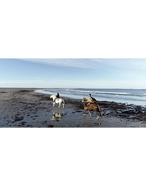 Video Isla Mocha - Gallop on the beach # 02