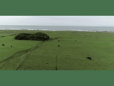 Video Isla Mocha - land and beach # 01