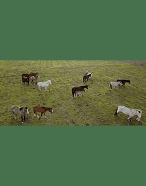 Video Campo Caballos #01