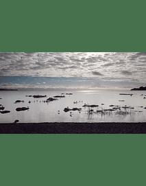 Video Aves en el lago desde frutillar 1