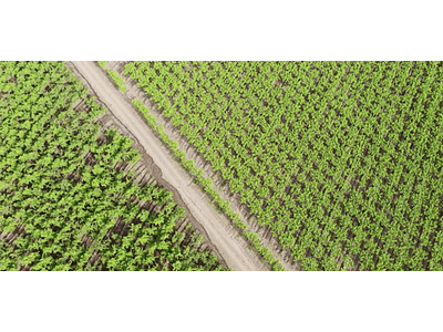 Video Vineyards of the Andes # 01