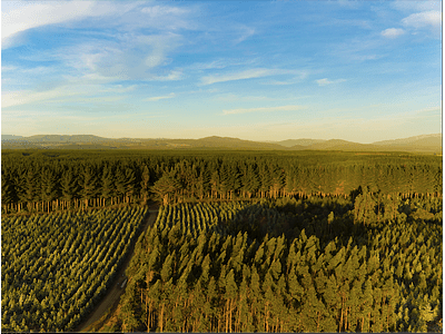 Foto Bosques forestales DJI_0010