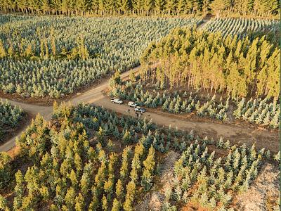 Foto Bosques forestales DJI_0011