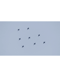Photo Aircraft Jet F5 TIGRE 343
