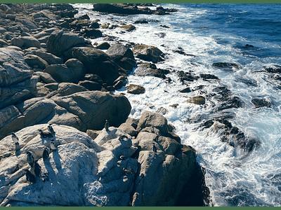 Foto pinguinos en islote 01