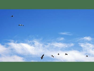 foto gaviotas volando 01