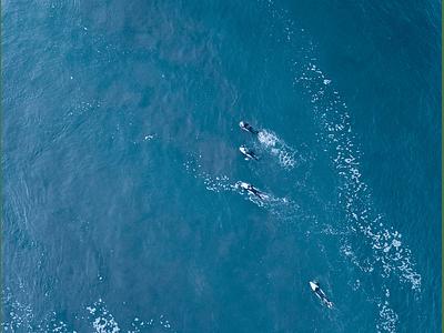 foto Surf 0082