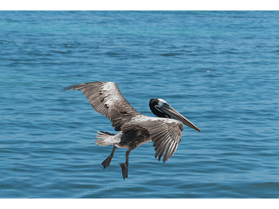 Photo pelican mooring 01