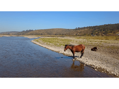 Video Horses in Rio Maipo 04