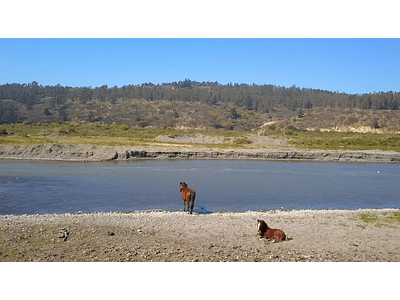 Video Horses in Rio Maipo 03