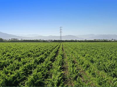 Rancagua fields photo # 01
