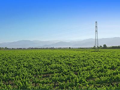 Rancagua fields photo # 04