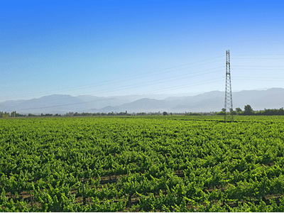 Foto campos de Rancagua #04