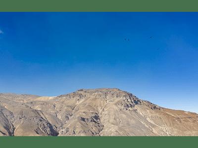 photo condors flying 00002