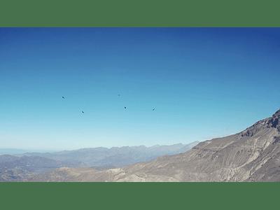 video Condor 1