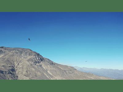 video Condor 2