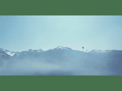 Video Condor 4