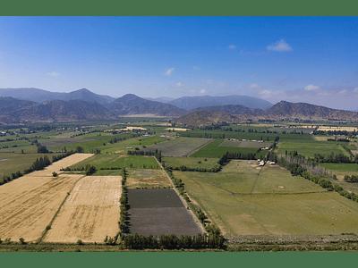 foto Agricultura Santa Amalia 00001