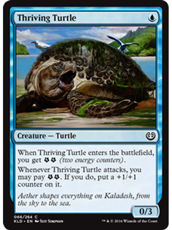 Thriving Turtle - KLD