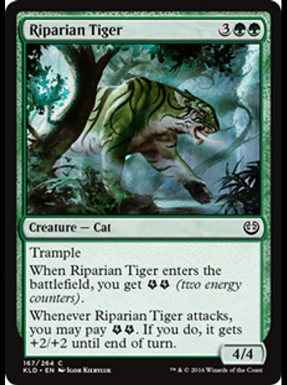 Riparian Tiger - KLD